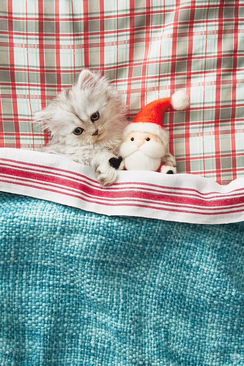 holiday pet photo ideas: pets in bed