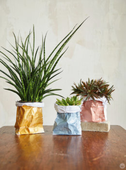 DIY paper plant bags: Turn pretty plants into perfect gifts