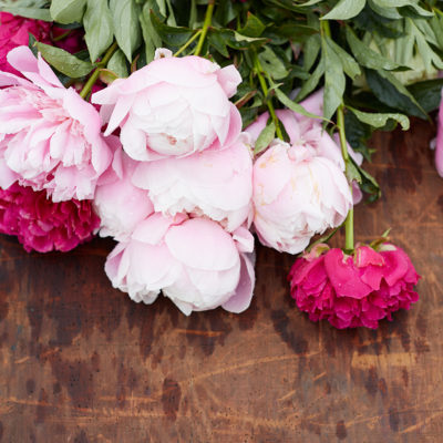 A behind the scenes look into a photo shoot at a peony farm.