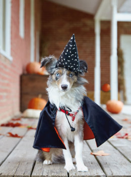 Dog costumes: Making Halloween fun for your fur baby