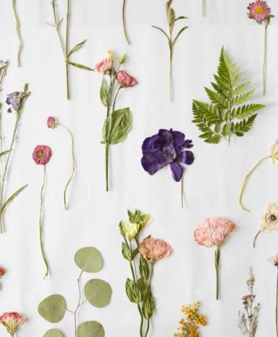 Pressed flower ideas from a hallmark workshop thinkkeare mightylinksfo
