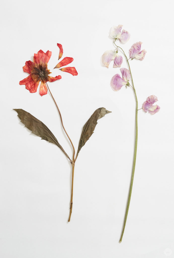 Pressed flower ideas from a Hallmark workshop - Think.Make ...